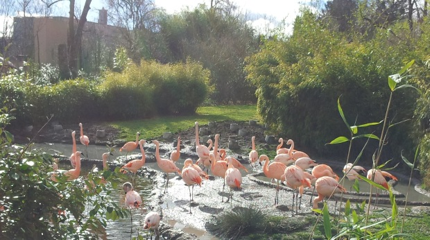 Flamingos at Zurich Zoo