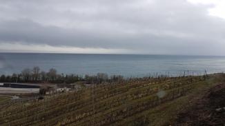Lake and vineyards